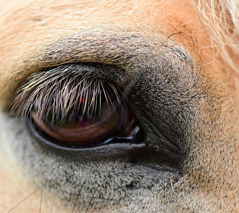Mirarnos a través de los caballos en familia