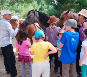 Grupo caballos econsciencia